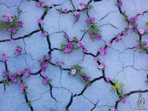 25-images-qui-montrent-que-la-nature-ne-renonce-jamais-2